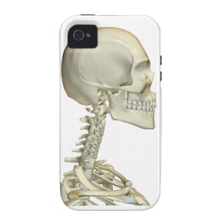 Bones of the Head and Neck 6 Case-Mate iPhone 4 Case