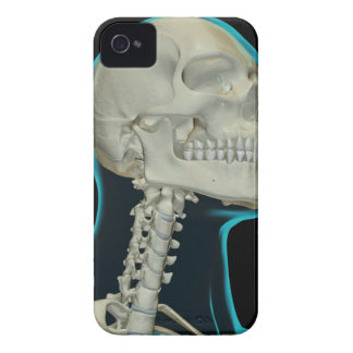 Bones of the Head and Neck 8 iPhone 4 Cases