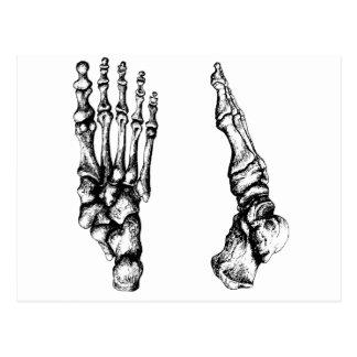Bones of the human foor. postcard