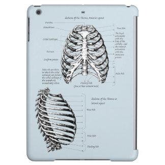 Bones of the Human Thorax