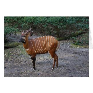 Bongo (Antelope) Card