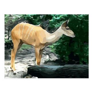 Bongo from Safari Postcard