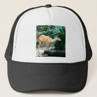 Bongo from Safari Trucker Hat