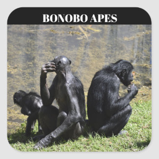 Bonobo Apes Square Sticker