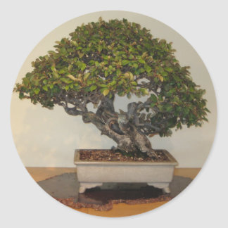 Bonsai at National Arboretum, Washington D.C. Classic Round Sticker
