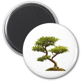 Bonsai plant magnet