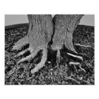 Bonsai Roots - Print Photo Print