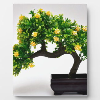Bonsai tree plaque