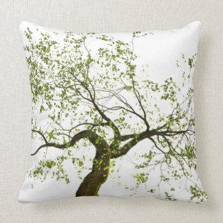 Bonzai tree 3d render cushion