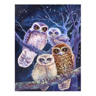 Boobook Owl Family Postcard