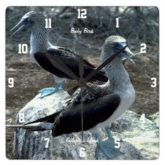 Booby Birds Wallclocks