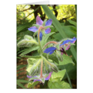 BORAGE Blue Pink Green --- Card