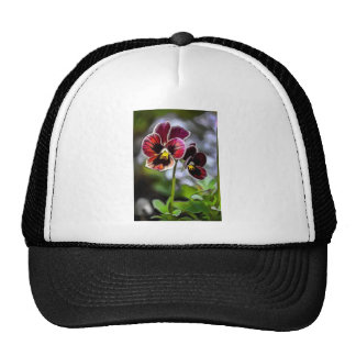 Bordeaux Pansy Flower Duo Cap