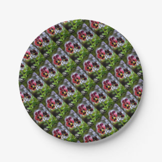 Bordeaux Pansy Flower Duo Paper Plate
