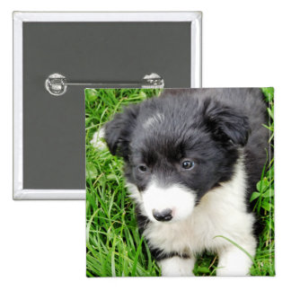 BORDER COLLIE 15 CM SQUARE BADGE