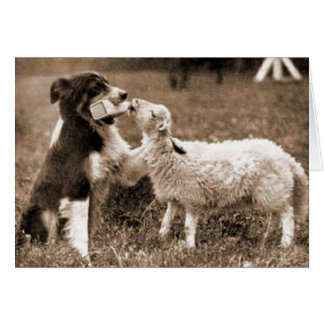 Border Collie and Lamb~Photo Card