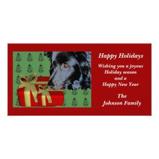 Border Collie Animal Christmas Holiday Card