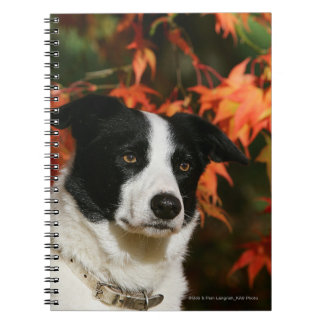 Border Collie Autumn Headshot Notebook