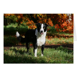Border Collie Autumn Standing Card