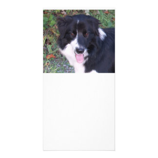 Border_Collie_b-w Picture Card