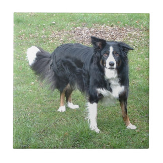 border collie black tri full small square tile