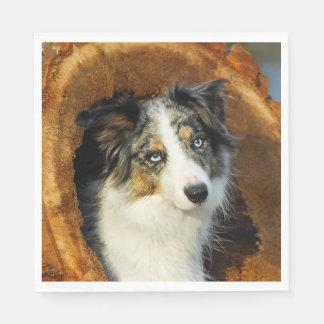 Border Collie Blue Merle Dog Head Photo Pet on - Disposable Serviette