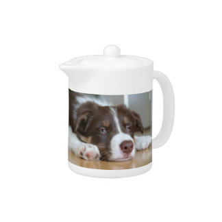 Border Collie Brown & White Dog Teapot