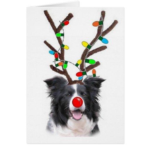 Border Collie Christmas Card~Rudolph