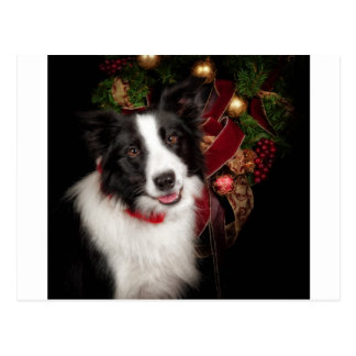 Border Collie Christmas Postcard