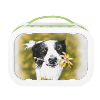 Border collie cutie lunch box