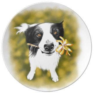 Border collie cutie plate