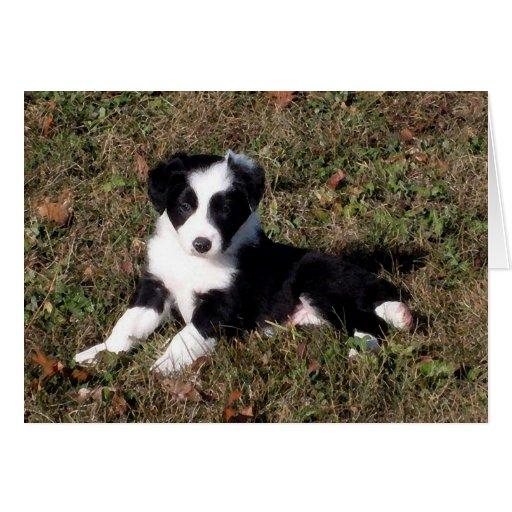 Border Collie Dog Portrait Blank Greeting Card