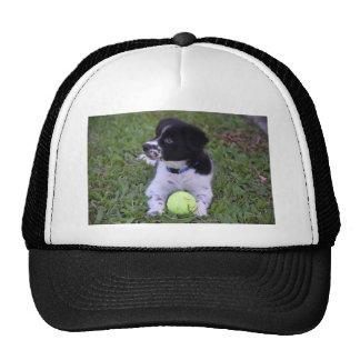 BORDER COLLIE DOG RUDAL QUEENSLAND AUSTRALIA CAP