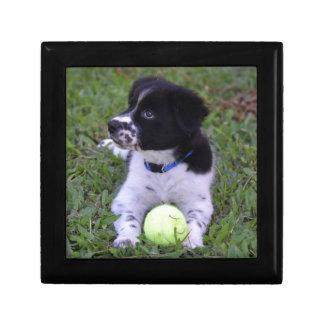 BORDER COLLIE DOG RUDAL QUEENSLAND AUSTRALIA SMALL SQUARE GIFT BOX