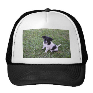 BORDER COLLIE DOG RURAL QUEENSLAND AUSTRALIA CAP