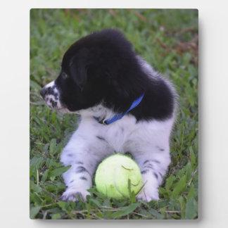 BORDER COLLIE DOG RURAL QUEENSLAND AUSTRALIA PHOTO PLAQUES