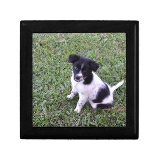 BORDER COLLIE DOG RURAL QUEENSLAND AUSTRALIA SMALL SQUARE GIFT BOX