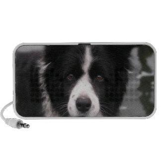 Border Collie Dog Speakers