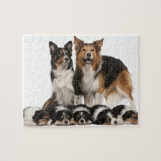 Border collie family jigsaw puzzle