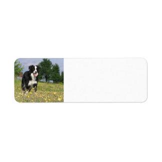 border collie full 3.png return address label
