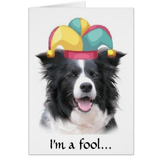 Border Collie Greeting Card~April Fool's Day