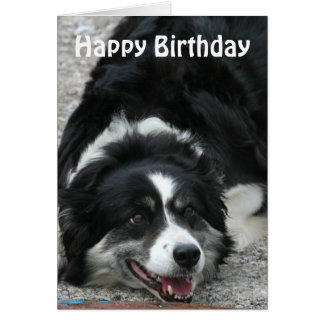 Border Collie - Happy Birthday Card