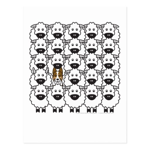 Border Collie in the Sheep Post Card