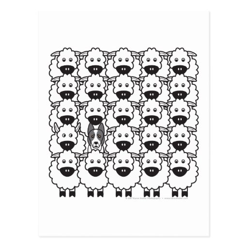 Border Collie in the Sheep Postcards