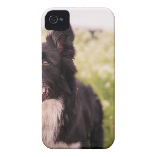 Border Collie iPhone 4 Covers