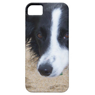 Border Collie items iPhone 5 Case