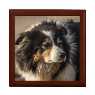 Border Collie Large Square Gift Box