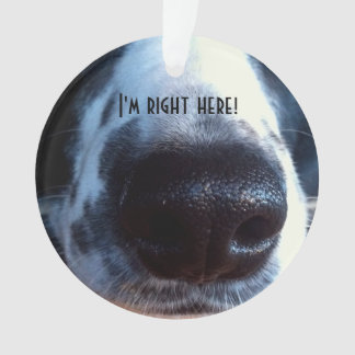 Border Collie Nose Close-Up Photograph Ornament