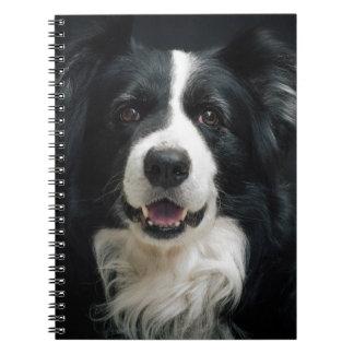 border-collie notebooks