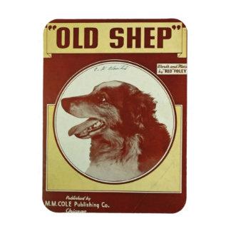 Border Collie~Old Shep~Refrigerator Magnet